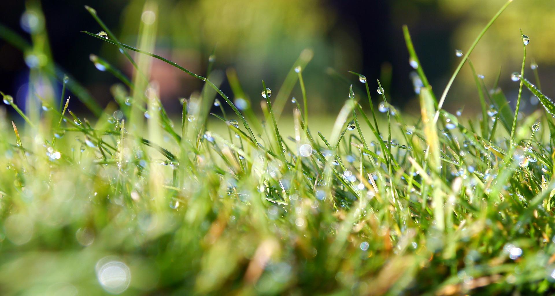 grass-498628_1920